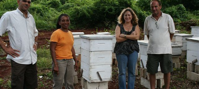 Thumnail image for Busy Bee Enterprises Success Story