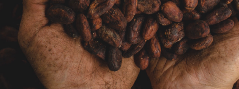 rethinking-the-economic-model-for-caribbean-cocoa-farmers-headline-image