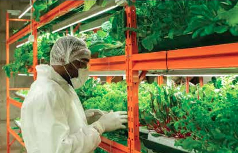 Thumnail image for Building Caribbean Food Security via Technology – A Caribbean Export Perspective